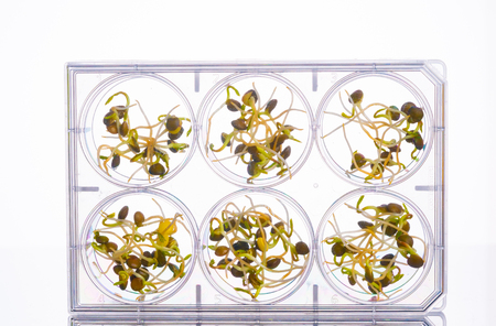 Microgreen sprouts quality control in Sanitary and epidemiological control laboratory