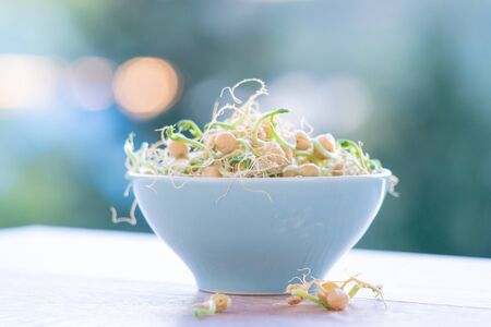 Germinated seeds for salad. Seeds For Salad Sprouts Imagens
