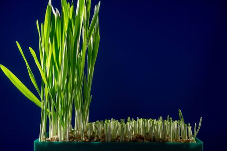 Green grass in small greenhouse