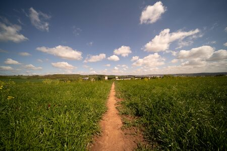 Dirty road in green summer field.  Rural road in the   field