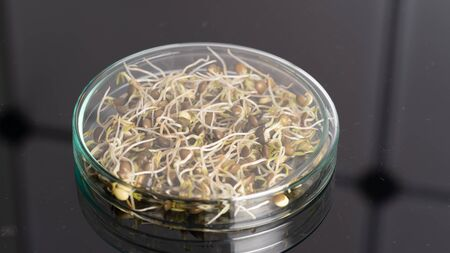 GMO plant sprouts science lab