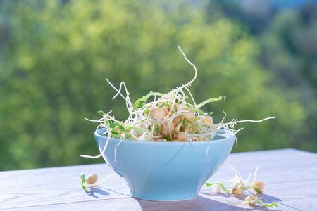 Germinated seeds for salad. Seeds For Salad Sprouts Zdjęcie Seryjne