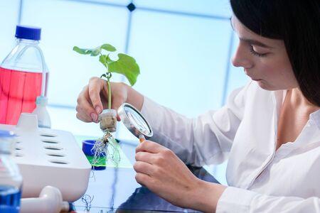 estudio de plantas cultivadas por el método de hidroponía. La niña en el laboratorio revisa la planta.