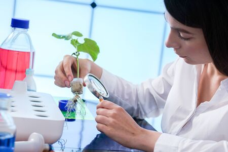 studio di piante coltivate con il metodo dell'idroponica. La ragazza del laboratorio controlla la pianta