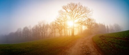 Panorama of a morning field in foggy weather Banque d'images - 144153212