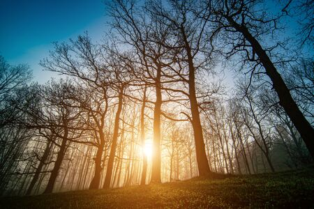 Panorama of morning forest in foggy weather Banque d'images - 144153011