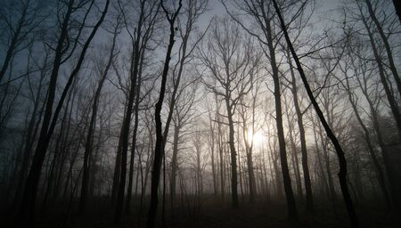 Panorama of morning forest in foggy weather