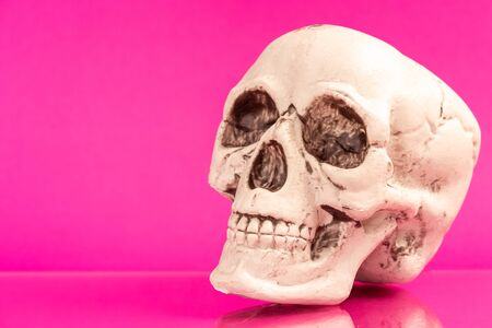 Artificial human skull on a colored background