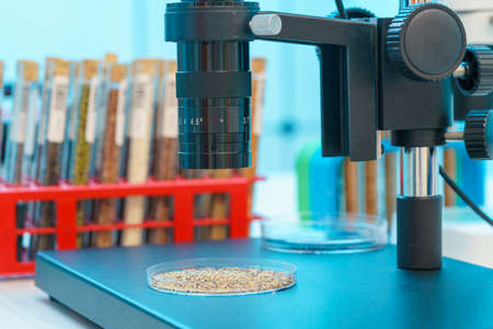 Research Analyzing Agricultural Grains And seeds In The Laboratory 写真素材 - 154993853