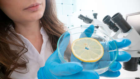 Inspection of the quality of vegetables and fruits in the laboratory of food quality 写真素材 - 154885364