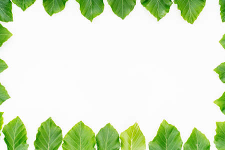 plant leaves on white background. Top view, Flat lay. 写真素材 - 154886390