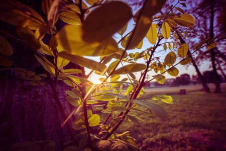 Sun rays passing through the tree foliage 写真素材