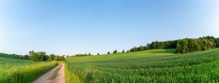 Panorama of an agricultural field with a path. Green grassy meadow with dirt road and clear sky, panorama 写真素材 - 154886513