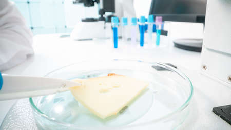 Cheese quality inspection in a quality control laboratory 写真素材 - 154886441