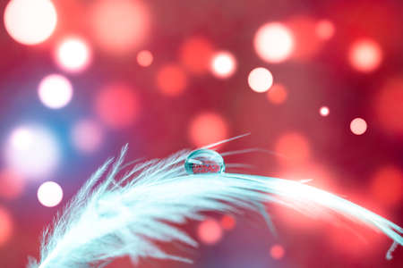 Bird feather on bokeh background with water drop 写真素材