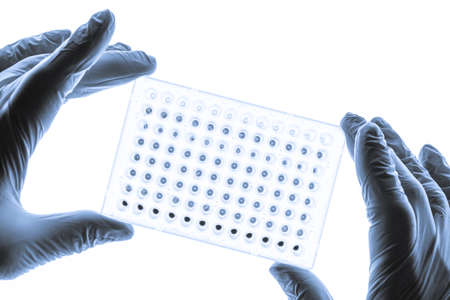 Dna Samples Are Loaded To 96-Well Plate For Pcr Analysis 写真素材