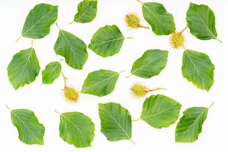 plant leaves on white background. Top view, Flat lay. 写真素材