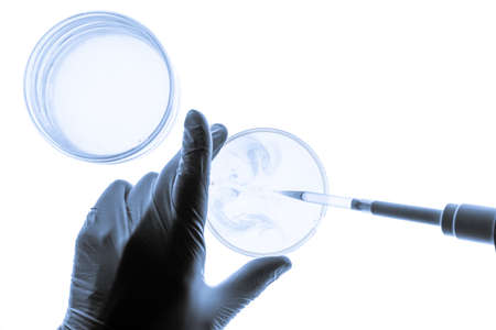 Chemical research in Petri dishes on white background. Experiment in a science laboratory.