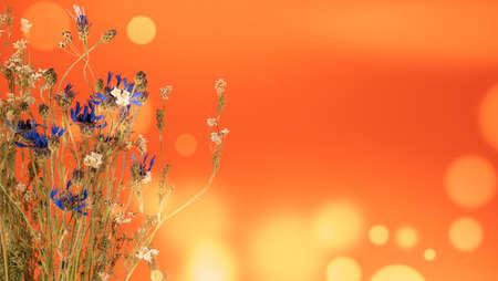 Dead wild flowers herbarium on bokeh background Stock fotó