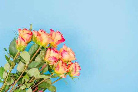 Rose flowers on a colored background High Quality Photo