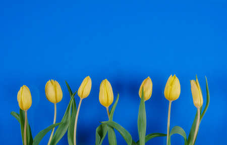 Tulips flowers on a color background High Quality Photo
