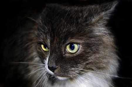 discreto: el gato amarillo discreto con los ojos verdes Foto de archivo