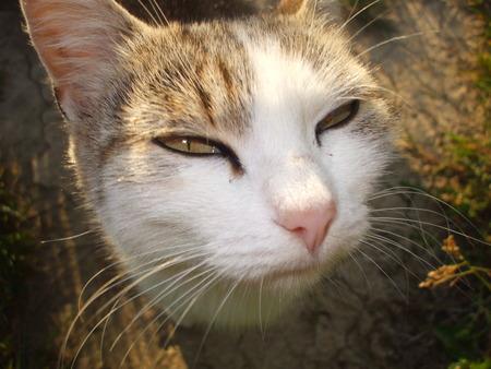 judging: Judging cat