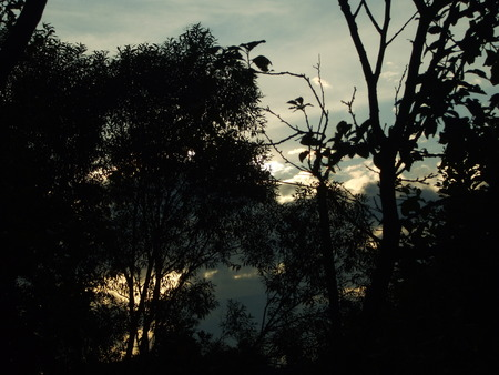 shadowy: Shadowy sunset in forest Stock Photo