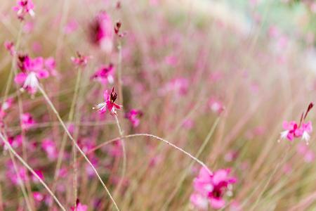 dwelling: Field Flowers Stock Photo