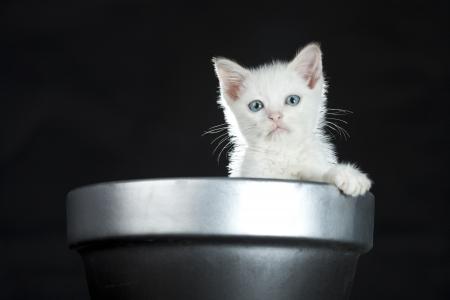 baby kitten image Stock Photo