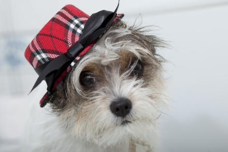 puppy with funny hat
