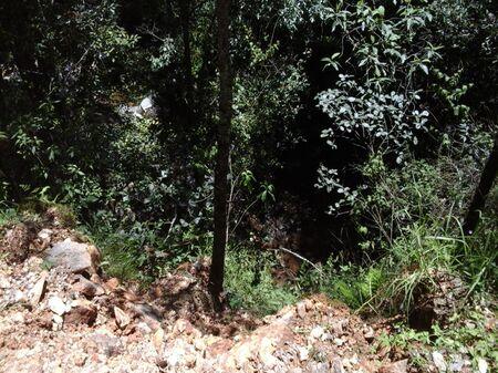 PHOTO OF SHRUBS, TAKEN IN HIDALGO MEXICO 版權商用圖片