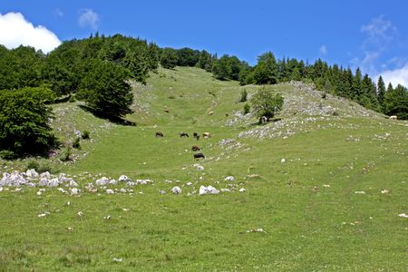 Mountain scenery from Brasov county. photo