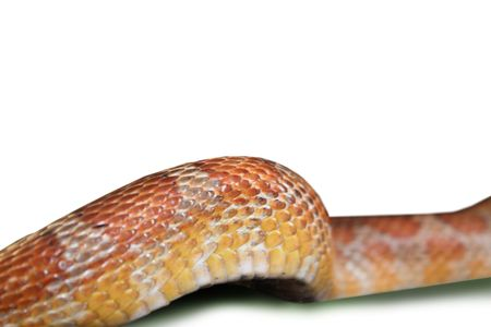 deadly dangerous: Body line of a curved snake