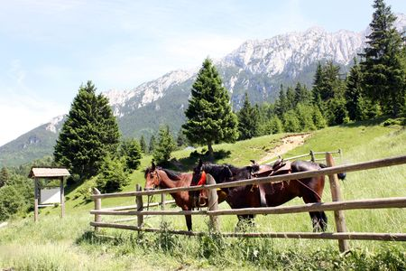 fenced in: Two horses in a fenced in pasture. Stock Photo