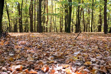 The forest in autumn - colorful Stock Photo - 5594673