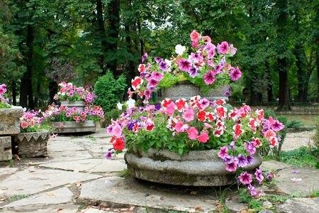 Flowerpots from central park of Cluj Napoca Stock Photo - 5603416