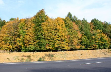 Scene of autumn road from Romania Stock Photo - 5690933