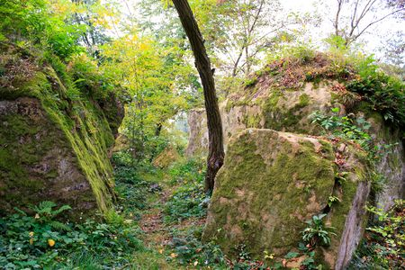 Green and wild nature, forest in Romania Stock Photo - 5705664