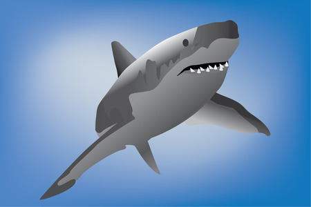 Great White Shark against a blue background Vector