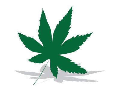 ganja: Feuille de marijuana ou de cannabis sur un fond blanc