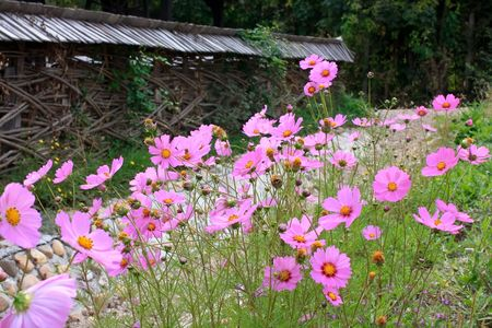Rural garden with magic flowers Stock Photo - 6344604