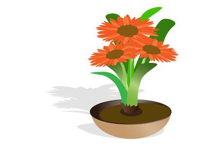 sprung: Orange gerbera flower isolated on white background. Illustration