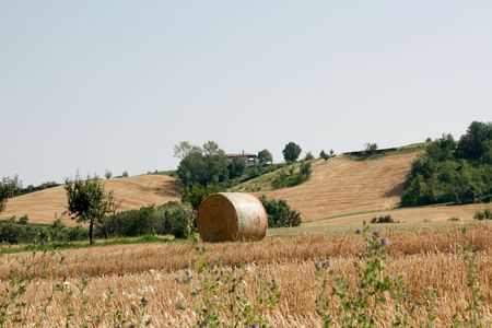 Straw bale on wheat field from Italy Stock Photo - 7455990