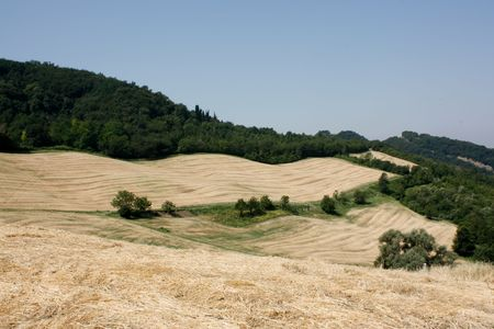 Agricultural wheat field from Italia Stock Photo - 7455991