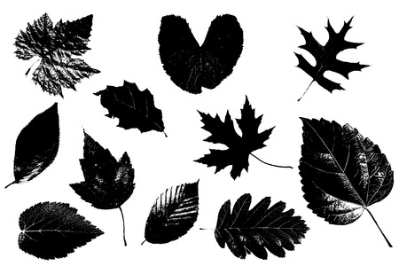 Different types of leaves isolated on white background