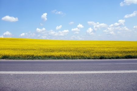 Scene with country road near yellow rapeseed fields photo