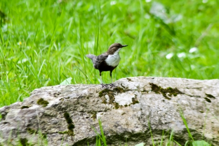 Little bird on rocks in natural environment Stock Photo - 13913696