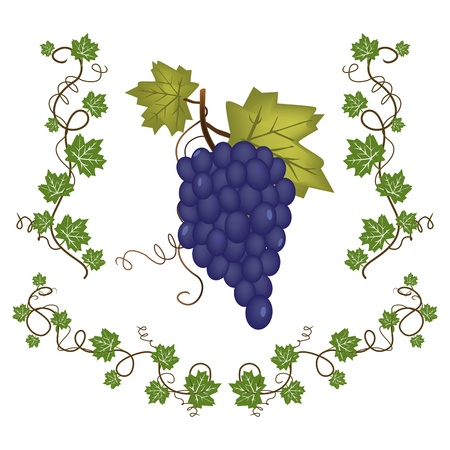 Graphic illustration of fresh grape cluster with green leafs Illustration