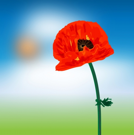 Graphic illustration of a poppy flower Vector